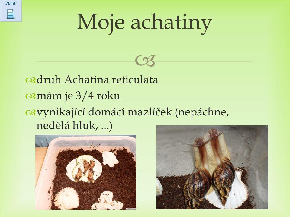   druh Achatina reticulata  mám je 3/4 roku  vynikající domácí mazlíček (nepáchne, nedělá hluk,...) Moje achatiny