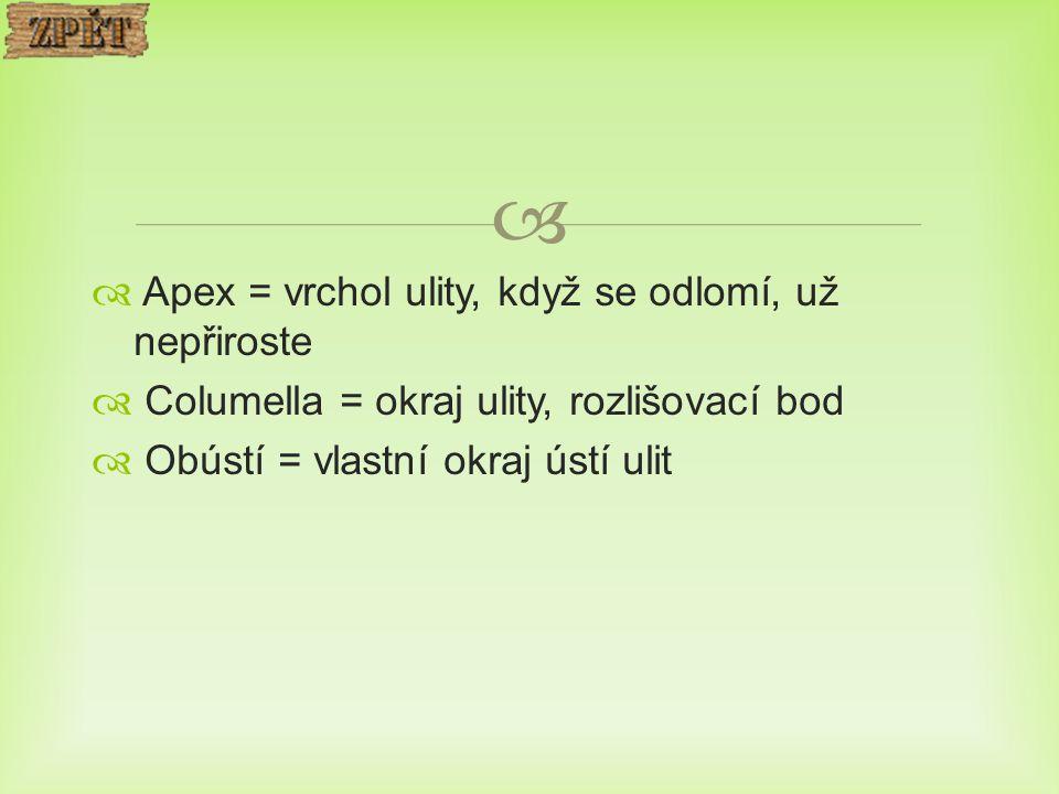   Apex = vrchol ulity, když se odlomí, už nepřiroste  Columella = okraj ulity, rozlišovací bod  Obústí = vlastní okraj ústí ulit