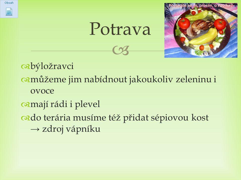  býložravci  můžeme jim nabídnout jakoukoliv zeleninu i ovoce  mají rádi i plevel  do terária musíme též přidat sépiovou kost → zdroj vápníku Po