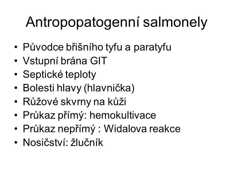 Antropopatogenní salmonely Původce břišního tyfu a paratyfu Vstupní brána GIT Septické teploty Bolesti hlavy (hlavnička) Růžové skvrny na kůži Průkaz přímý: hemokultivace Průkaz nepřímý : Widalova reakce Nosičství: žlučník