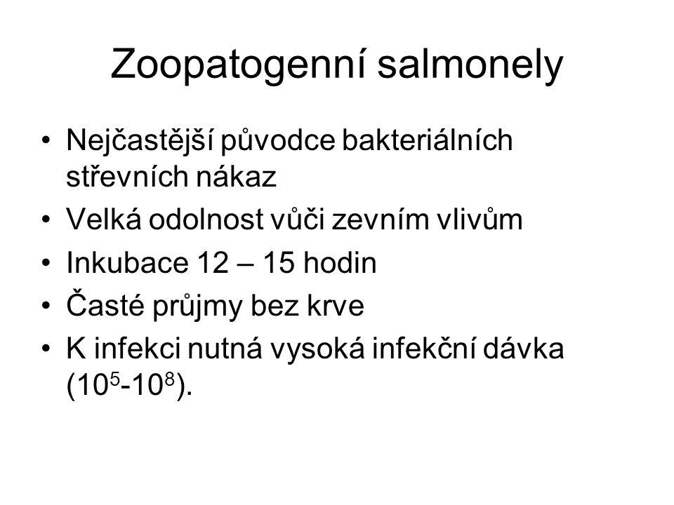 Zoopatogenní salmonely Nejčastější původce bakteriálních střevních nákaz Velká odolnost vůči zevním vlivům Inkubace 12 – 15 hodin Časté průjmy bez krve K infekci nutná vysoká infekční dávka (10 5 -10 8 ).