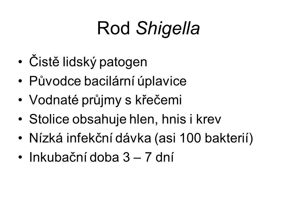 Rod Shigella Čistě lidský patogen Původce bacilární úplavice Vodnaté průjmy s křečemi Stolice obsahuje hlen, hnis i krev Nízká infekční dávka (asi 100 bakterií) Inkubační doba 3 – 7 dní