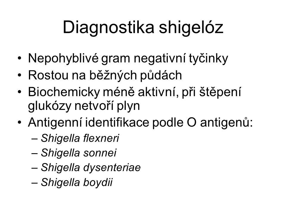 Diagnostika shigelóz Nepohyblivé gram negativní tyčinky Rostou na běžných půdách Biochemicky méně aktivní, při štěpení glukózy netvoří plyn Antigenní identifikace podle O antigenů: –Shigella flexneri –Shigella sonnei –Shigella dysenteriae –Shigella boydii