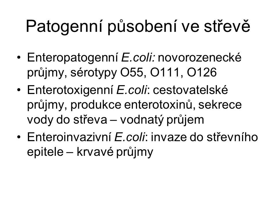Patogenní působení ve střevě Enteropatogenní E.coli: novorozenecké průjmy, sérotypy O55, O111, O126 Enterotoxigenní E.coli: cestovatelské průjmy, produkce enterotoxinů, sekrece vody do střeva – vodnatý průjem Enteroinvazivní E.coli: invaze do střevního epitele – krvavé průjmy