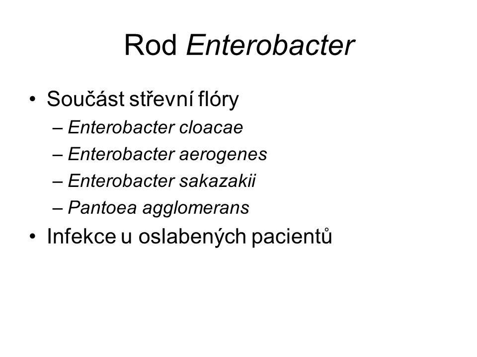 Rod Enterobacter Součást střevní flóry –Enterobacter cloacae –Enterobacter aerogenes –Enterobacter sakazakii –Pantoea agglomerans Infekce u oslabených