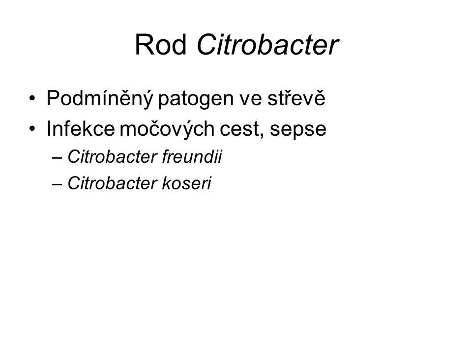 Rod Citrobacter Podmíněný patogen ve střevě Infekce močových cest, sepse –Citrobacter freundii –Citrobacter koseri