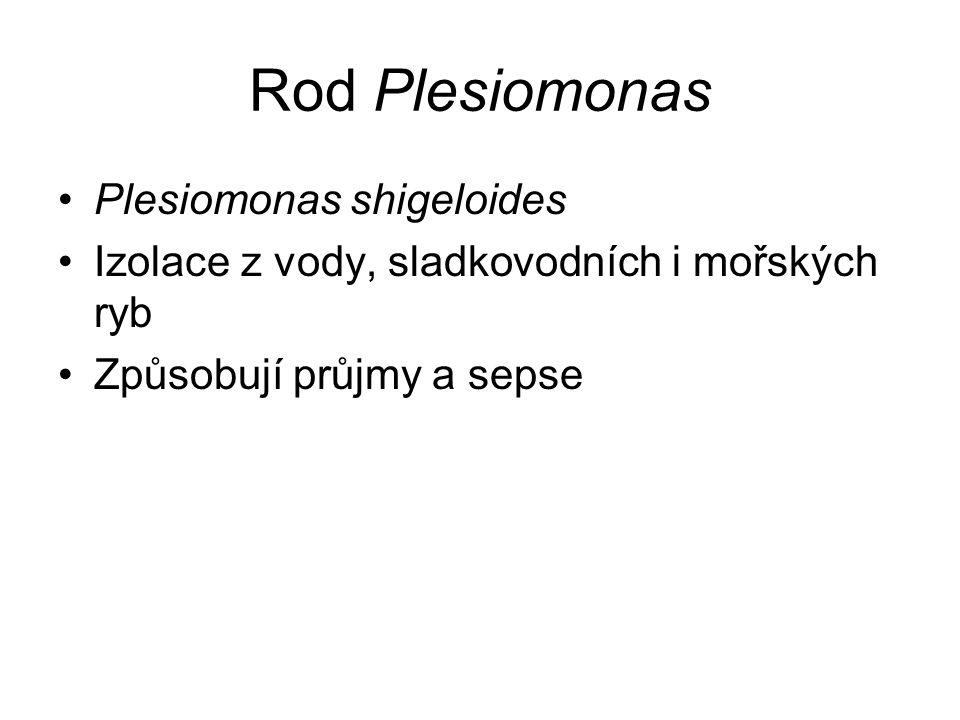 Rod Plesiomonas Plesiomonas shigeloides Izolace z vody, sladkovodních i mořských ryb Způsobují průjmy a sepse