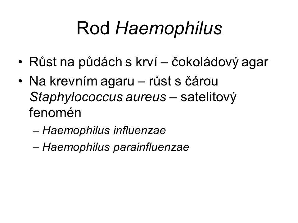 Rod Haemophilus Růst na půdách s krví – čokoládový agar Na krevním agaru – růst s čárou Staphylococcus aureus – satelitový fenomén –Haemophilus influe