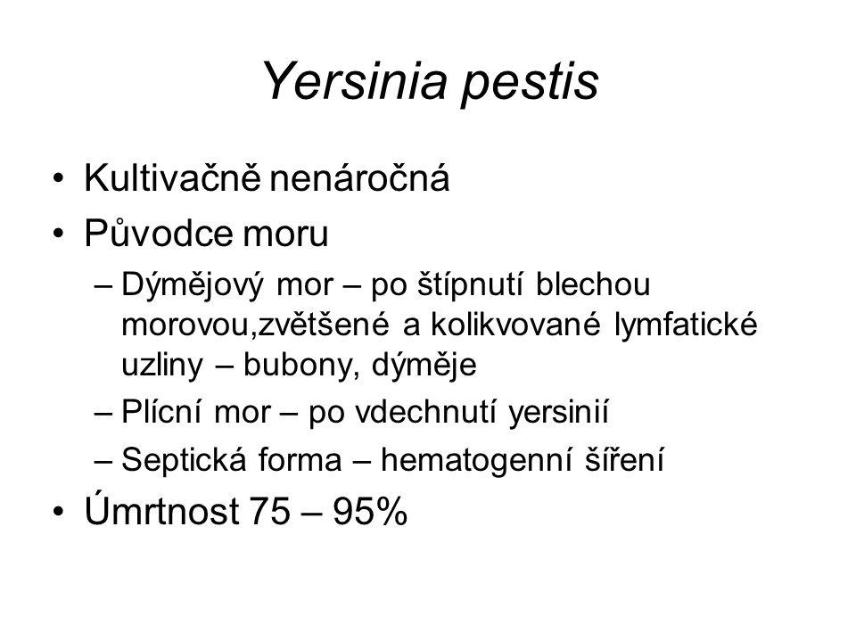 Yersinia pestis Kultivačně nenáročná Původce moru –Dýmějový mor – po štípnutí blechou morovou,zvětšené a kolikvované lymfatické uzliny – bubony, dýměje –Plícní mor – po vdechnutí yersinií –Septická forma – hematogenní šíření Úmrtnost 75 – 95%