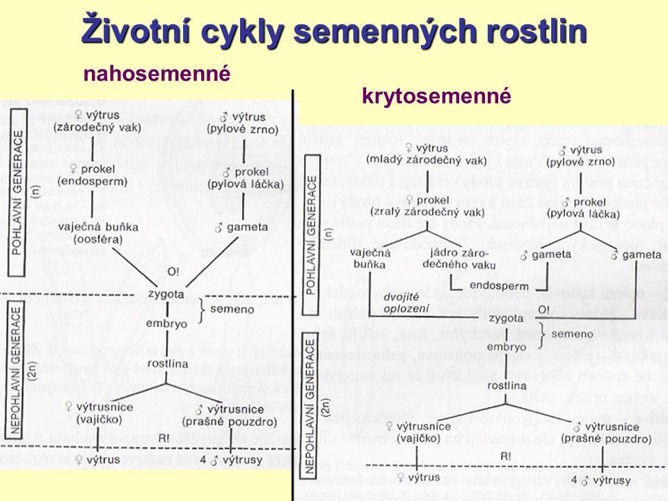 Životní cykly semenných rostlin nahosemenné krytosemenné