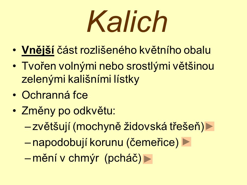 Kalich a koruna