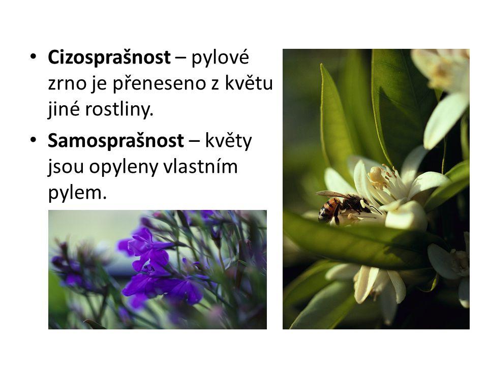 Cizosprašnost – pylové zrno je přeneseno z květu jiné rostliny. Samosprašnost – květy jsou opyleny vlastním pylem.