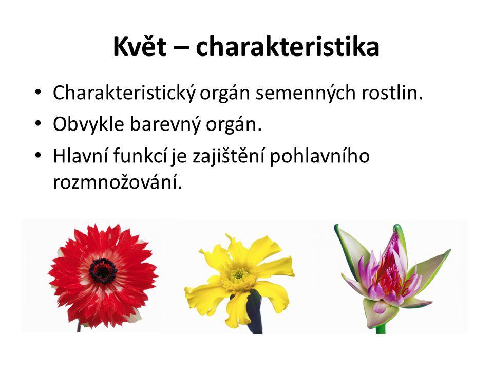 Květ – charakteristika Charakteristický orgán semenných rostlin. Obvykle barevný orgán. Hlavní funkcí je zajištění pohlavního rozmnožování.