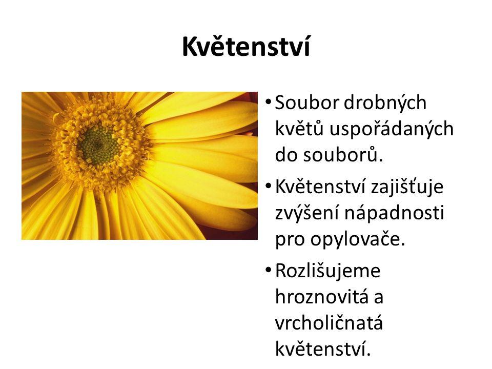 Květenství Soubor drobných květů uspořádaných do souborů. Květenství zajišťuje zvýšení nápadnosti pro opylovače. Rozlišujeme hroznovitá a vrcholičnatá
