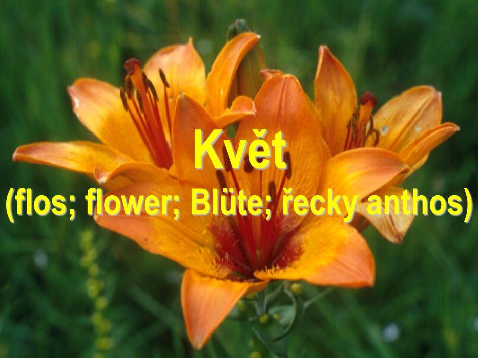 Květ (flos; flower; Blüte; řecky anthos)