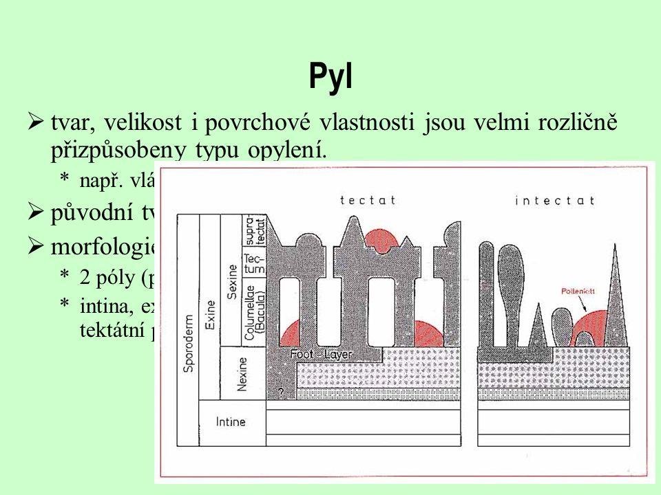 Pyl  tvar, velikost i povrchové vlastnosti jsou velmi rozličně přizpůsobeny typu opylení. *např. vláknitý pyl  původní tvar člunkovitě elipsoidní, m