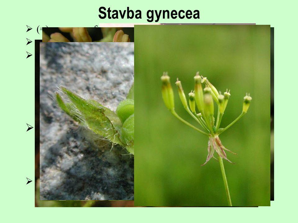 Stavba gynecea  (=) megasporofyl  pistillodium  semeník *svrchní, spodní, polospodní *septum, diafragma, pseudomonomerní semeník  čnělka *stylodiu