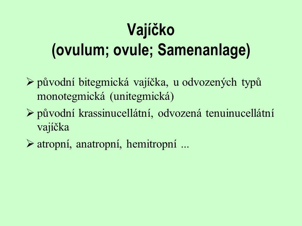 Vajíčko (ovulum; ovule; Samenanlage)  původní bitegmická vajíčka, u odvozených typů monotegmická (unitegmická)  původní krassinucellátní, odvozená t