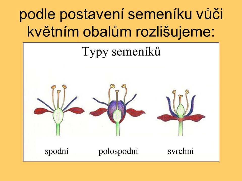 podle postavení semeníku vůči květním obalům rozlišujeme: