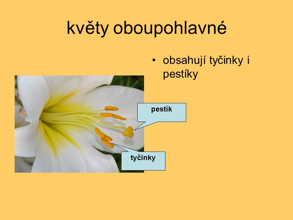 květy oboupohlavné obsahují tyčinky i pestíky tyčinky pestík