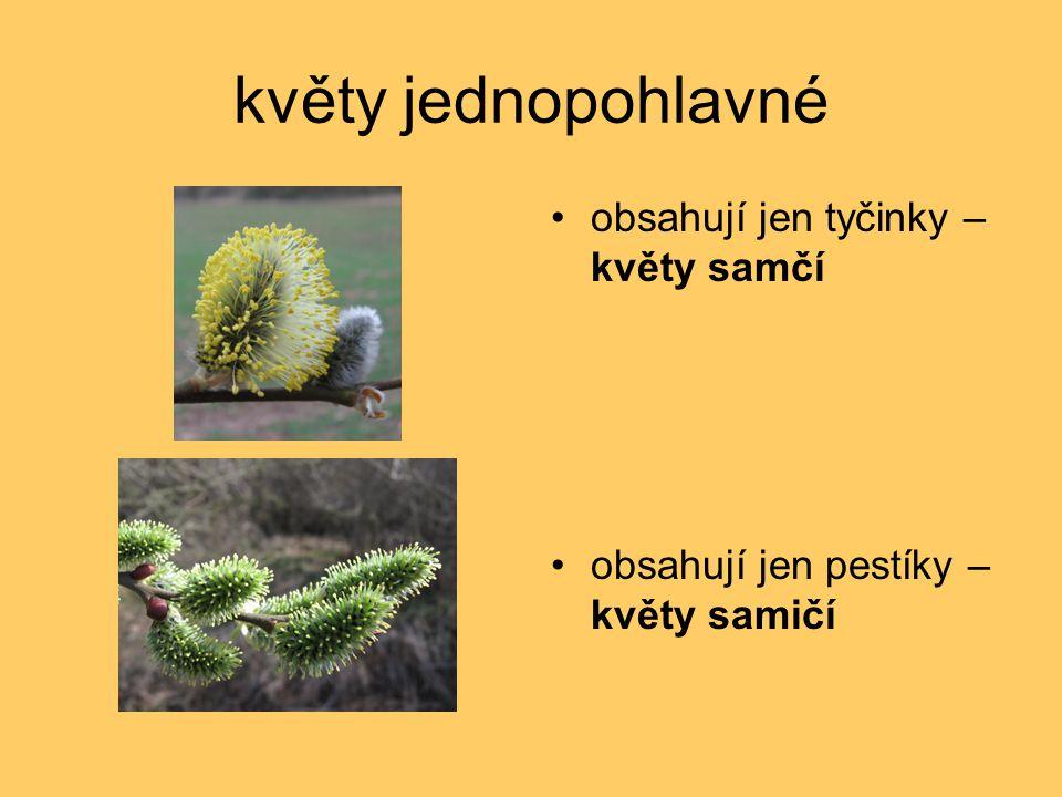 květy jednopohlavné obsahují jen tyčinky – květy samčí obsahují jen pestíky – květy samičí