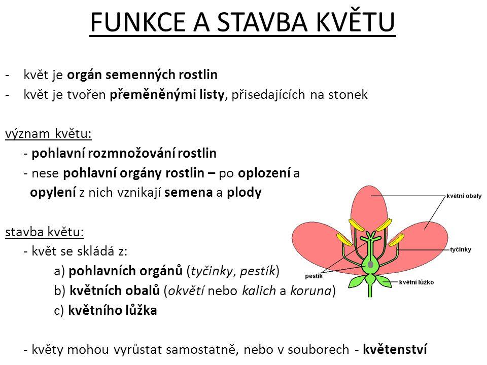 POHLAVNÍ ORGÁNY a)samčí pohlavní orgán – tyčinka - skládá se z nitky a prašníku - v prašnících vznikají pylová zrna (samčí pohlavní buňky) b) samičí pohlavní orgán – pestík - pestík je tvořen bliznou, čnělkou a semeníkem - v semeníku vznikají vajíčka (samičí pohlavní buňky)