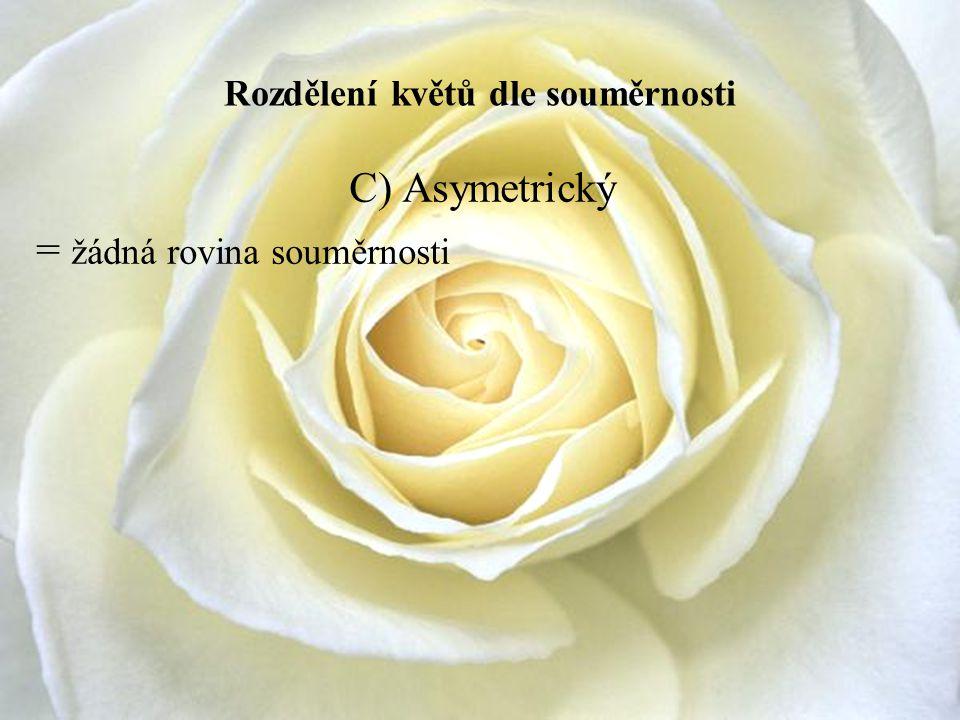 Rozdělení květů dle souměrnosti C) Asymetrický = žádná rovina souměrnosti