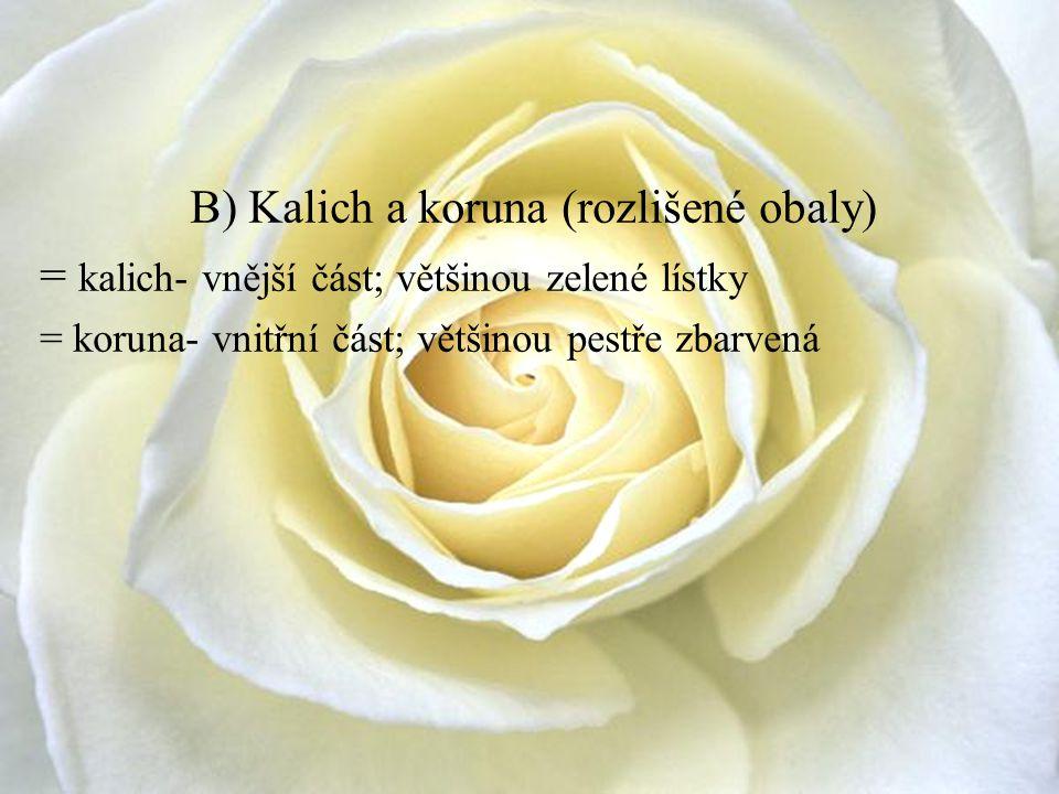 B) Kalich a koruna (rozlišené obaly) = kalich- vnější část; většinou zelené lístky = koruna- vnitřní část; většinou pestře zbarvená