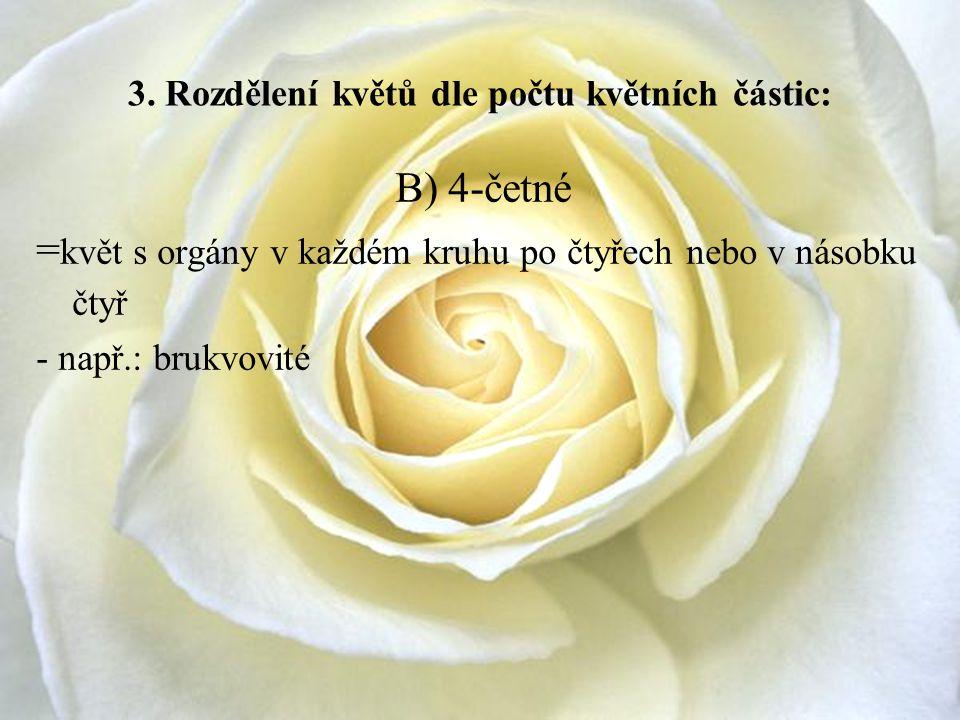 3. Rozdělení květů dle počtu květních částic: B) 4-četné = květ s orgány v každém kruhu po čtyřech nebo v násobku čtyř - např.: brukvovité
