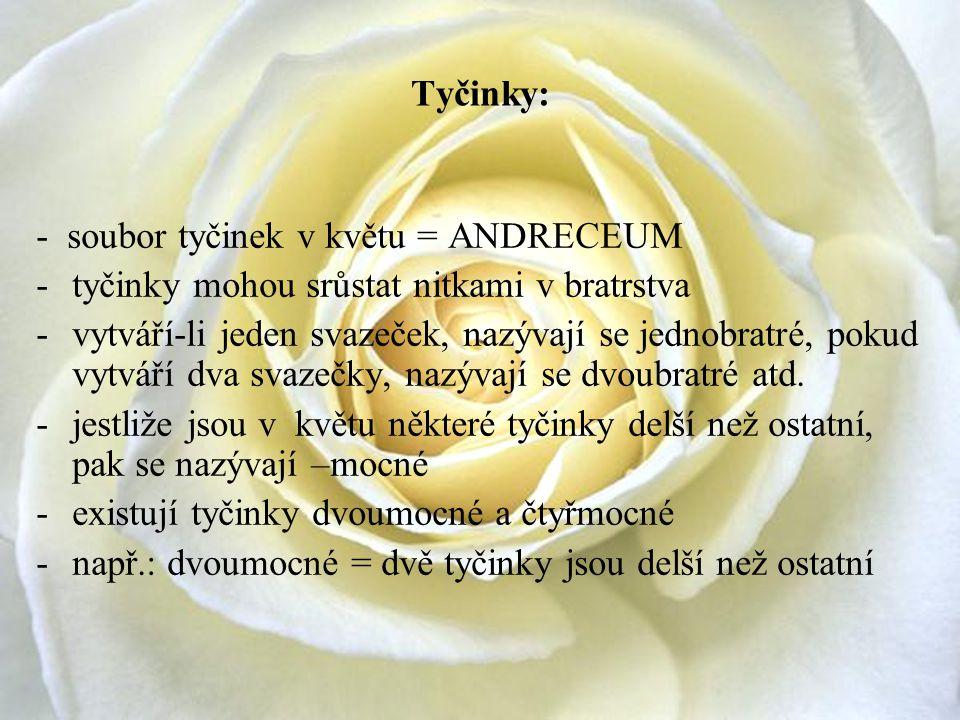 Tyčinky: - soubor tyčinek v květu = ANDRECEUM -tyčinky mohou srůstat nitkami v bratrstva -vytváří-li jeden svazeček, nazývají se jednobratré, pokud vy