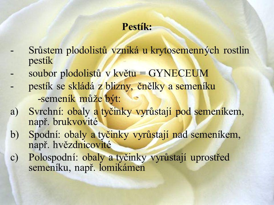 Pestík: -Srůstem plodolistů vzniká u krytosemenných rostlin pestík -soubor plodolistů v květu = GYNECEUM -pestík se skládá z blizny, čnělky a semeníku