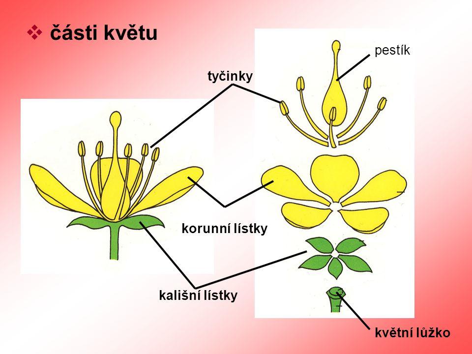  části květu květní lůžko kališní lístky korunní lístky tyčinky pestík