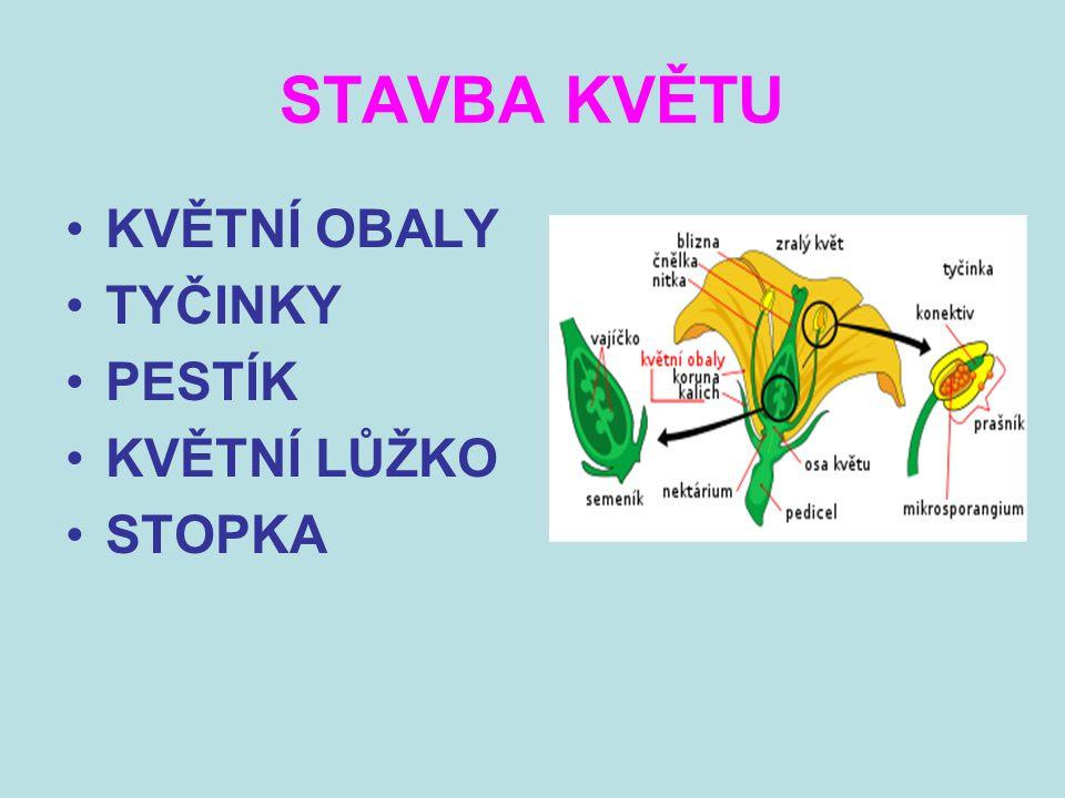 Téma: STAVBA KVĚTU - P řírodovědné praktikum - 7.ROČNÍK Použitý software: držitel licence - ZŠ J.