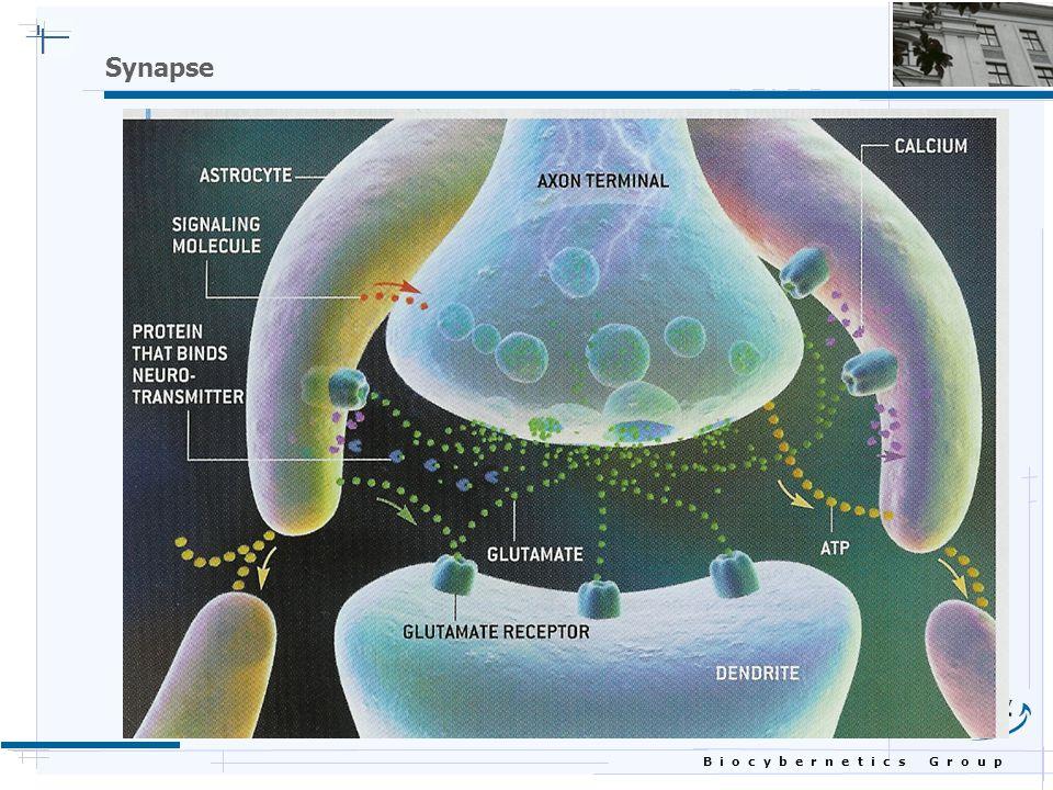 B i o c y b e r n e t i c s G r o u p Synapse