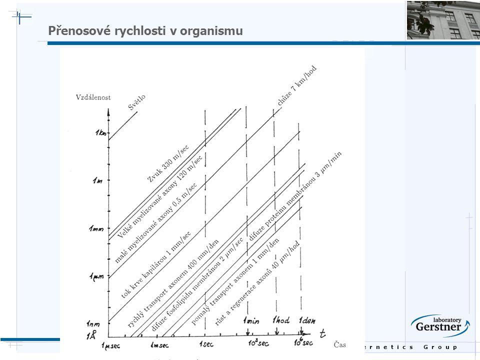B i o c y b e r n e t i c s G r o u p Přenosové rychlosti v organismu