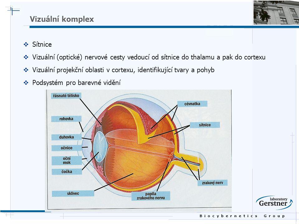 B i o c y b e r n e t i c s G r o u p Vizuální komplex  Sítnice  Vizuální (optické) nervové cesty vedoucí od sítnice do thalamu a pak do cortexu  Vizuální projekční oblasti v cortexu, identifikující tvary a pohyb  Podsystém pro barevné vidění