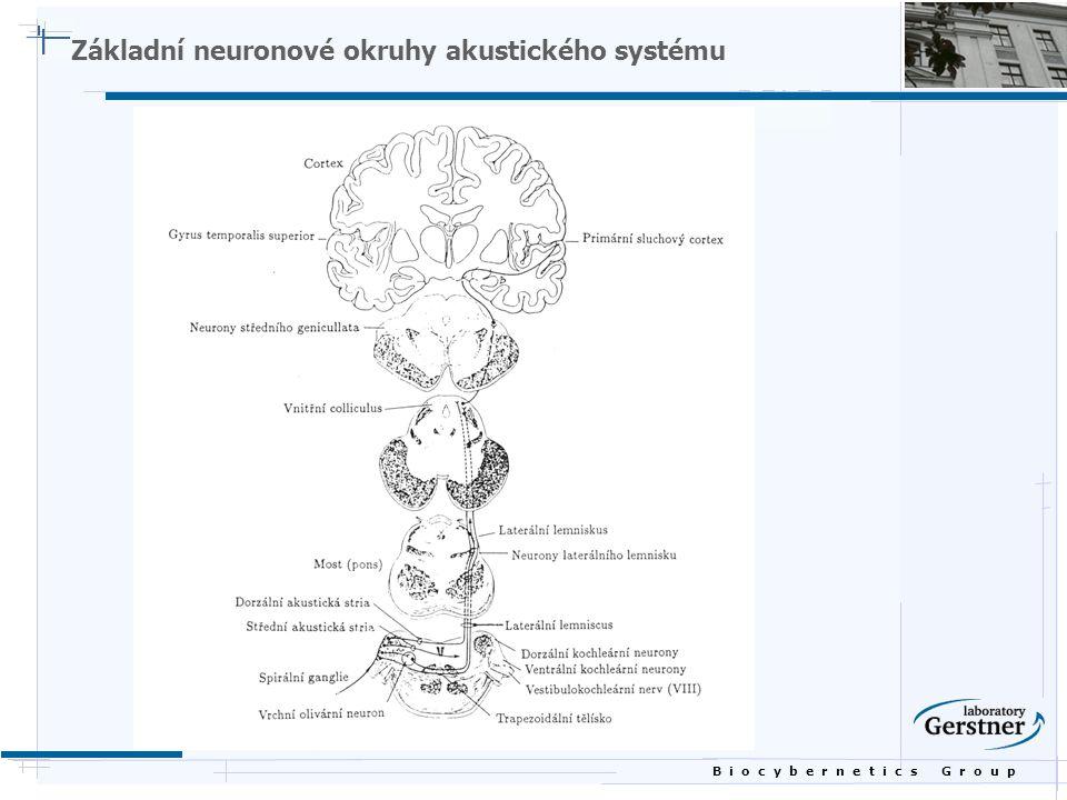 B i o c y b e r n e t i c s G r o u p Základní neuronové okruhy akustického systému
