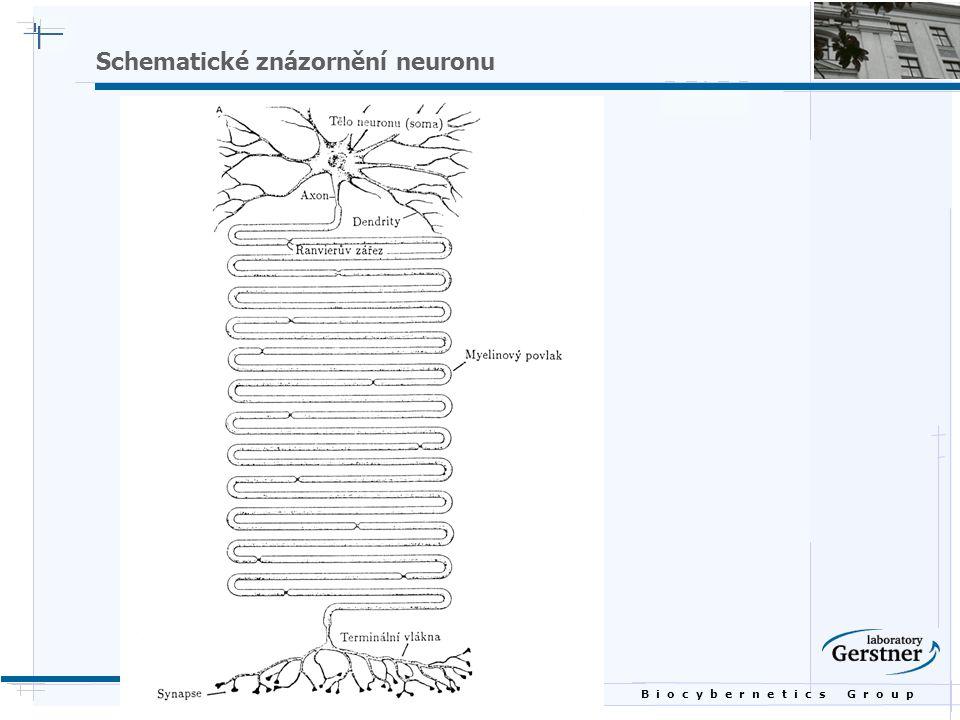 B i o c y b e r n e t i c s G r o u p Schematické znázornění neuronu