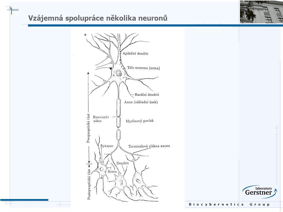 B i o c y b e r n e t i c s G r o u p Vzájemná spolupráce několika neuronů
