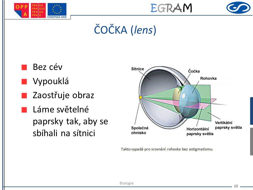 EGRAMEGRAM SÍTNICE (retina) tenká průhledná membrána 130 miliónů buněk (člověk) tyčinky (vnímají intenzitu světla, černobílé vidění) čípky (barevné vi