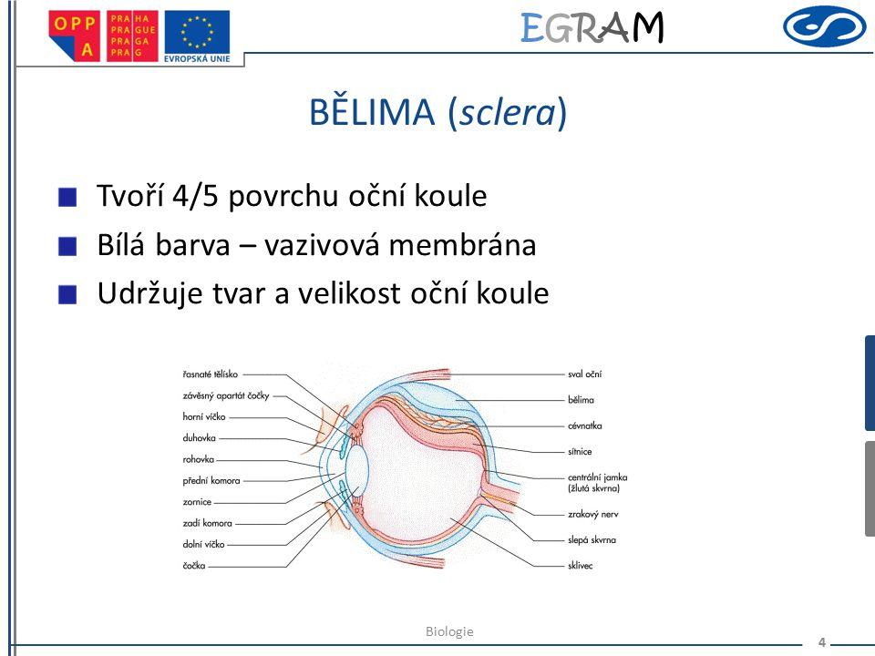 EGRAMEGRAM STAVBA OKA II. 3 Biologie