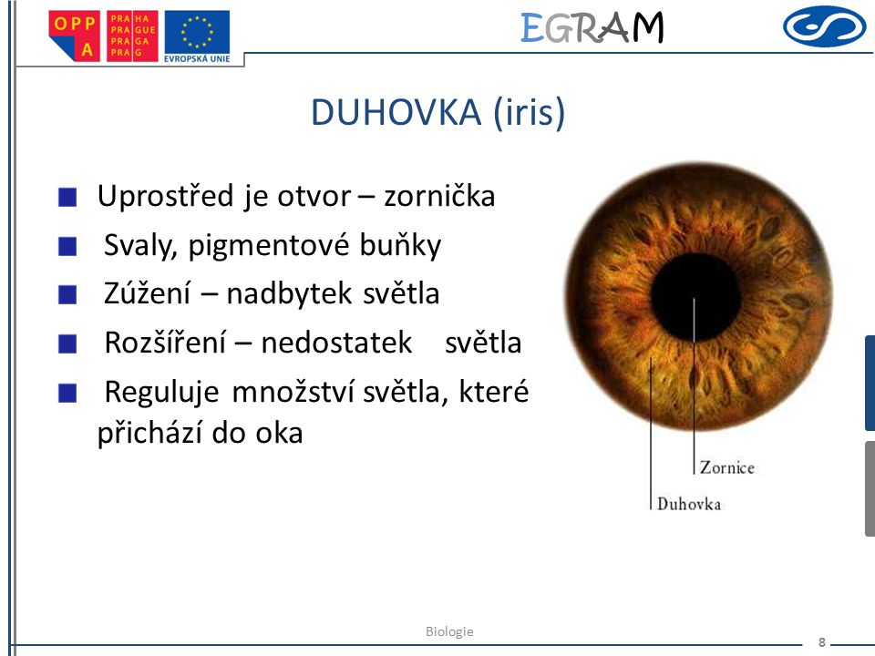 EGRAMEGRAM ŘASNATÉ TĚLÍSKO (corpus ciliare) Zhrublá cévnatka – hladký sval tvoří závěsný aparát čočky umožňuje akomodaci - zaostřování oka Produkuje k