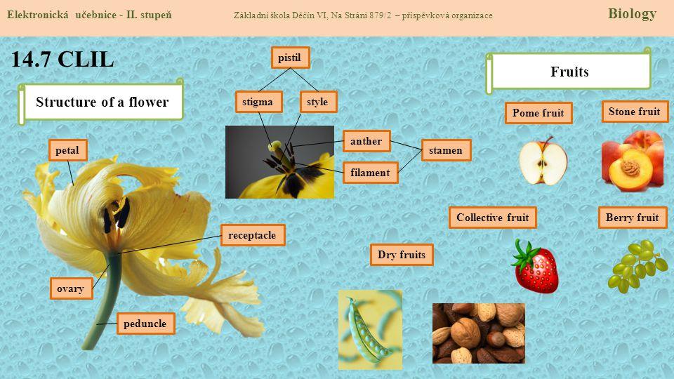 14.7 CLIL Elektronická učebnice - II. stupeň Základní škola Děčín VI, Na Stráni 879/2 – příspěvková organizace Biology Structure of a flower petal ped