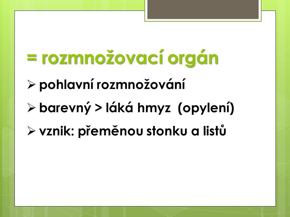 = rozmnožovací orgán  pohlavní rozmnožování  barevný > láká hmyz (opylení)  vznik: přeměnou stonku a listů