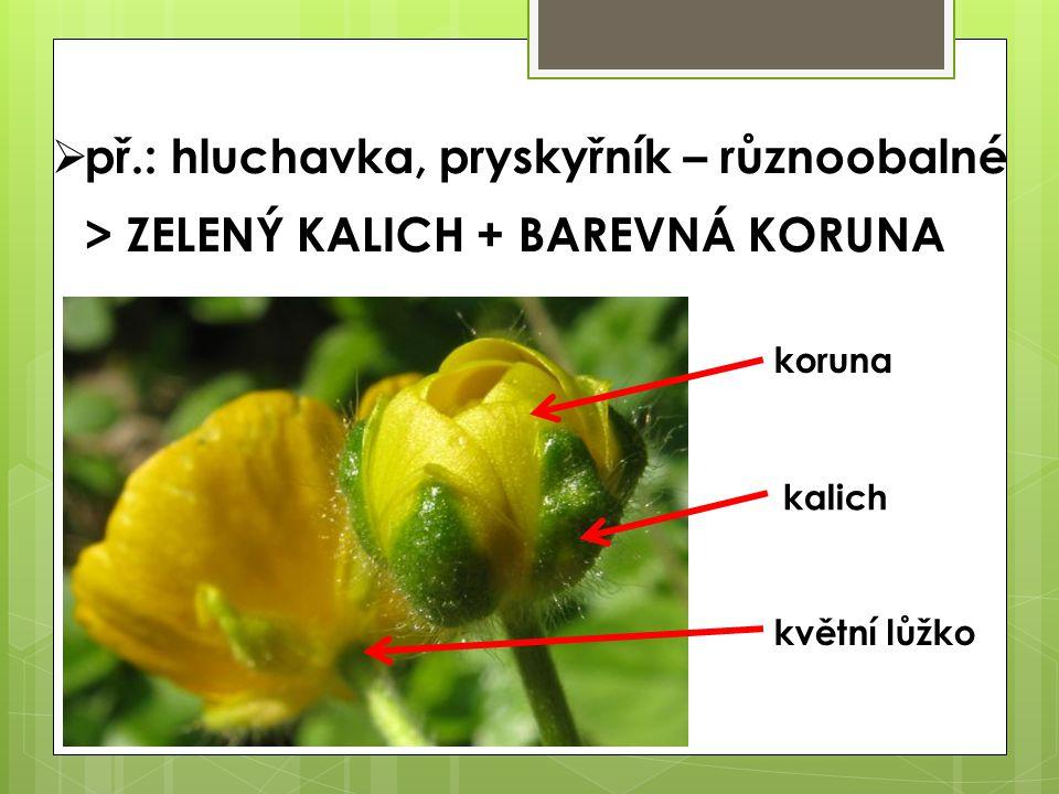  př.: hluchavka, pryskyřník – různoobalné > ZELENÝ KALICH + BAREVNÁ KORUNA koruna kalich květní lůžko
