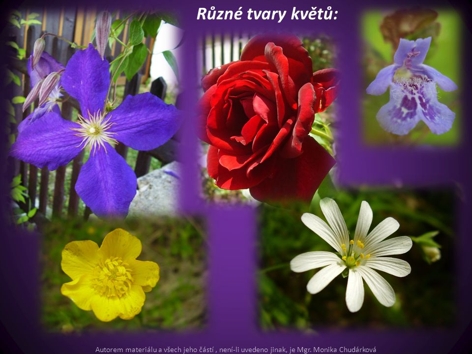 Různé tvary květů: Autorem materiálu a všech jeho částí, není-li uvedeno jinak, je Mgr. Monika Chudárková