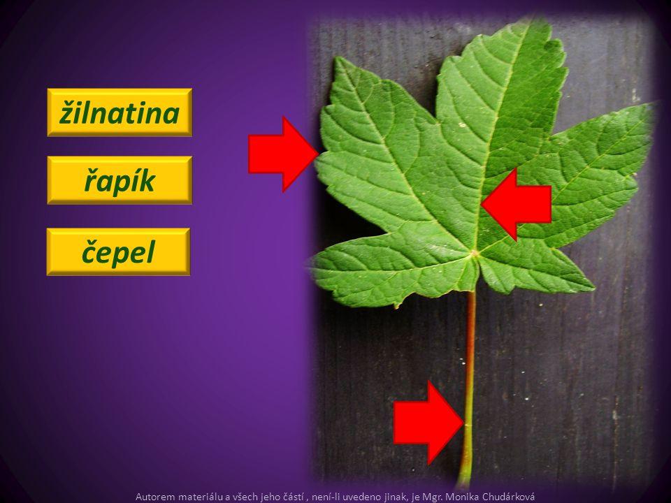 tyčinky pestík kalich koruna Zopakujeme si: Autorem materiálu a všech jeho částí, není-li uvedeno jinak, je Mgr.