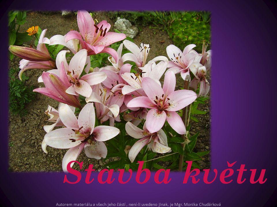 Stavba květu Autorem materiálu a všech jeho částí, není-li uvedeno jinak, je Mgr. Monika Chudárková
