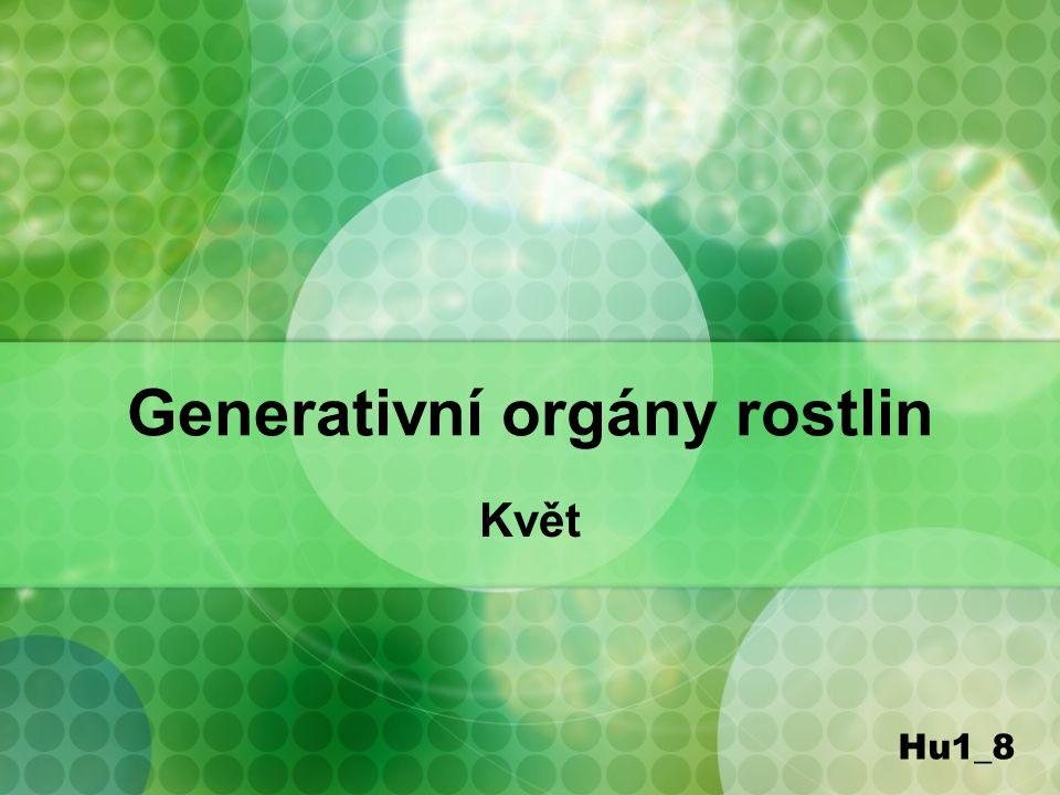 Generativní orgány rostlin Květ Hu1_8