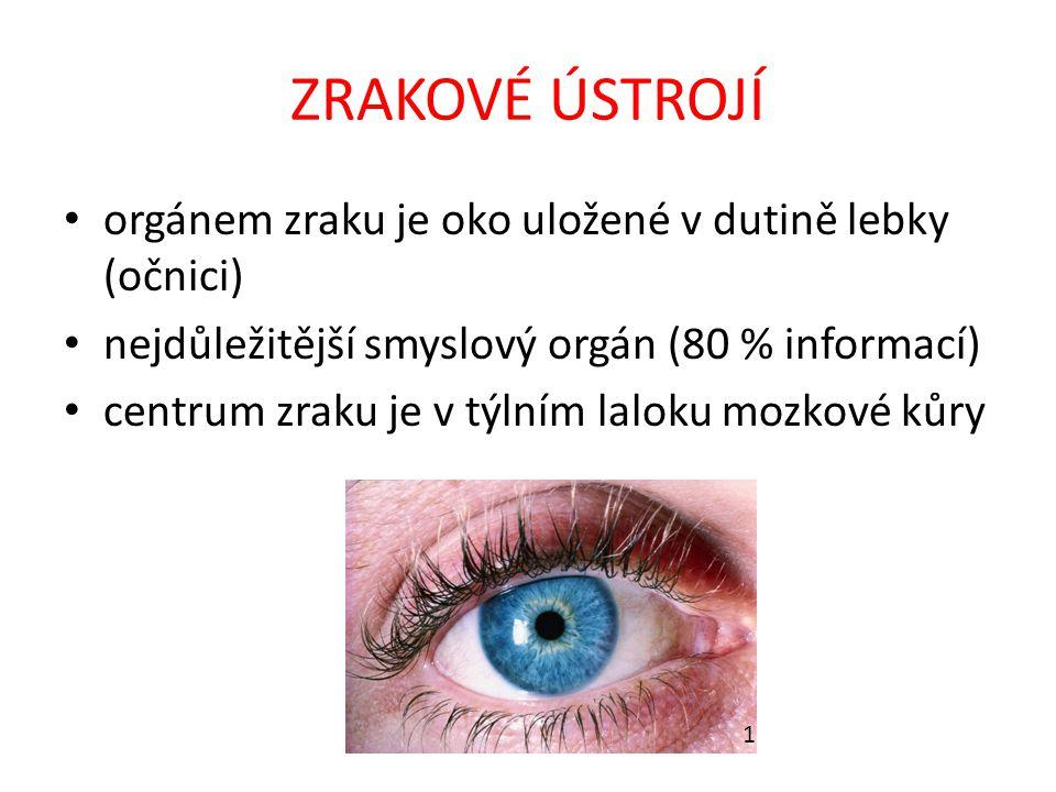 ZRAKOVÉ ÚSTROJÍ orgánem zraku je oko uložené v dutině lebky (očnici) nejdůležitější smyslový orgán (80 % informací) centrum zraku je v týlním laloku m